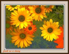 shoebox floral-#1