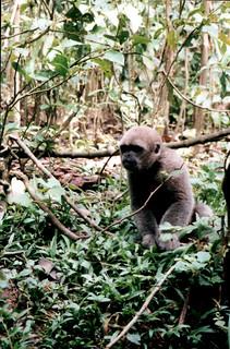In the Jungle around Rio Napo
