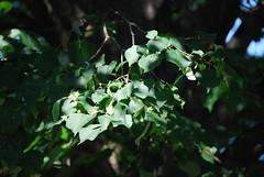 Branch In A Sunbeam