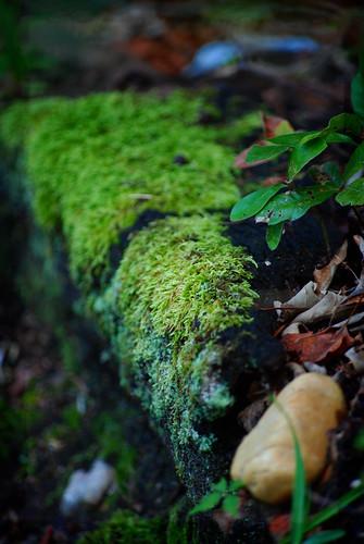 rock garden moss peaceful arkansas nikond60
