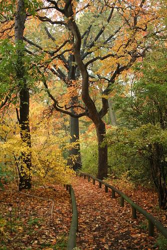 Nyssa fall color II