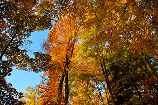 Fall Skyward