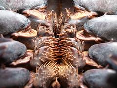 arthropod, animal, macro photography, fauna, close-up, decapoda,