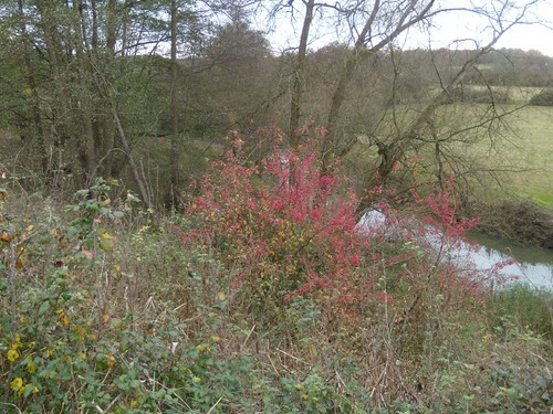 River Mole with spindle bush
