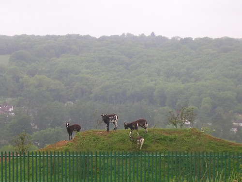 Riddlesdown goats