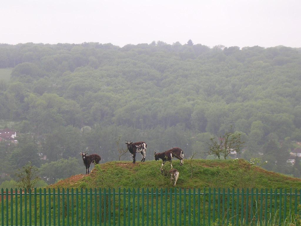 Riddlesdown goats Whyteleaf Circular