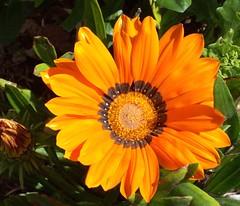 annual plant, calendula, flower, yellow, plant, herb, wildflower, flora, petal,