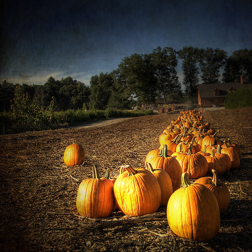 fall texture photoshop pumpkin landscape october farm pumpkins newengland september hdr