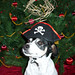 2008-12-09 - FSM Dogs (Jayne Pirate) - 0009