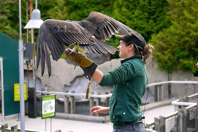 Birds Up Close | Vancouver Aquarium