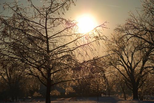 trees winter sunset ice silhouette iowa
