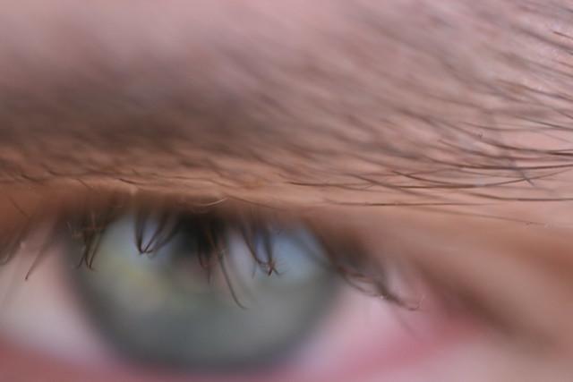 Eyebrow and eyelashes