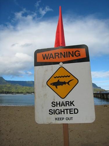 kauai, shark, warning IMG_5545
