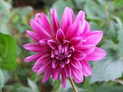 Pink in October........ but cold - flckr - Kristian Dela Cour