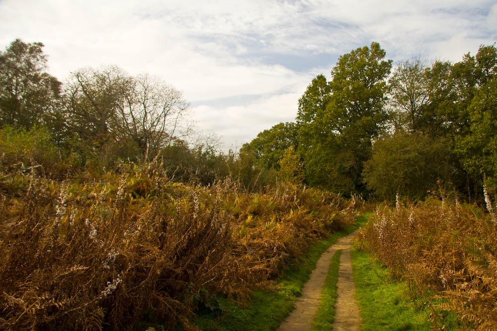 Reigate Park Hill
