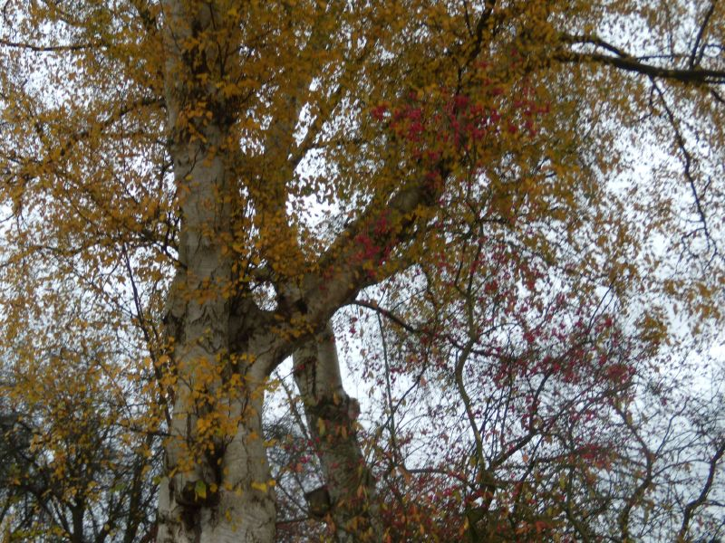 autumn trees Dorking to Reigate