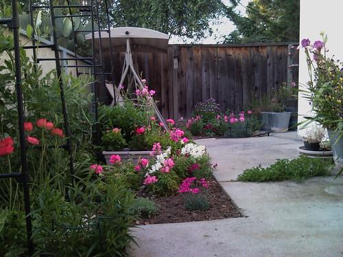 The garden this evening.