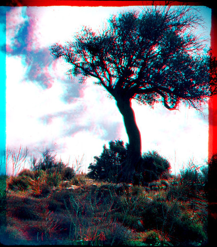 sky tree film clouds stereoscopic 3d olive cyprus slide anaglyph scan velvia scanned fujichrome 3dglasses stereographic wraystereographic