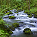 Emerald Creek by Casey Morris