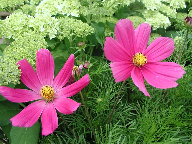 Blüten-II