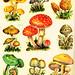 Mushrooms by sandritocat