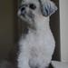 Small photo of Atilla