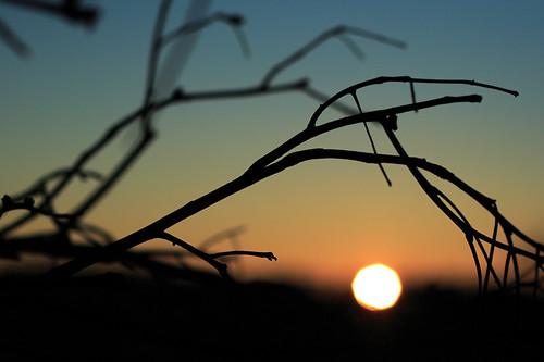 autumn plants fall nature sunrise landscape massachusetts branches canon350d canonrebelxt worcester greenhillpark canonef50mmf14usm canon50mmf14