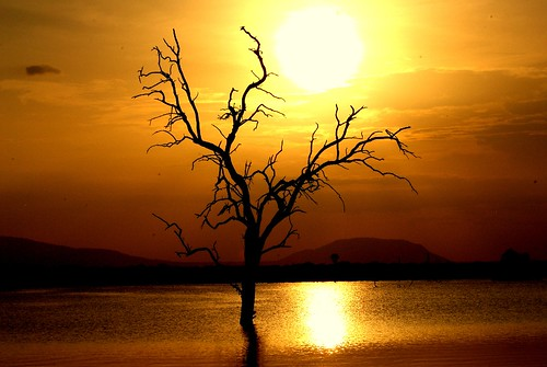 Selous Sunset