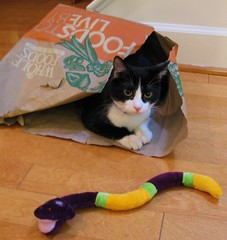 Oliver in Paper Bag with Snake
