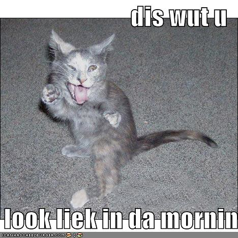 funny-pictures-morning-mocking-cat