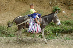 They master riding early in this part of Peru