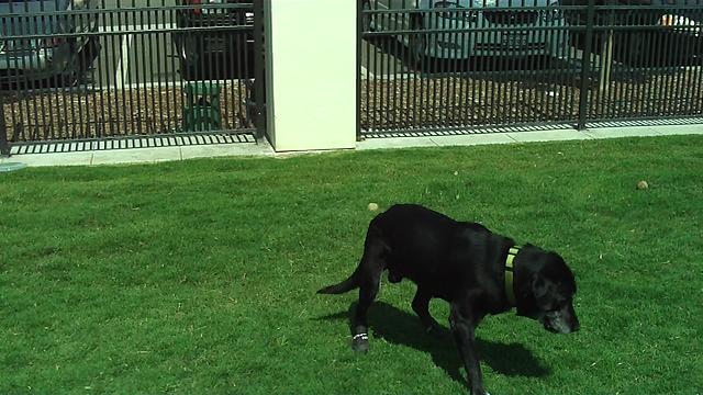 Otay Mall Dog Park Hours