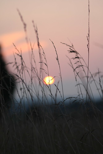 sunset grass geotagged nc lincolncounty geo:lat=3553048 geo:lon=81263551 ncpedia
