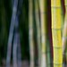 Happy Bamboo Bokeh Wednesday