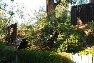 Here Come Those Santa Ana Winds Again