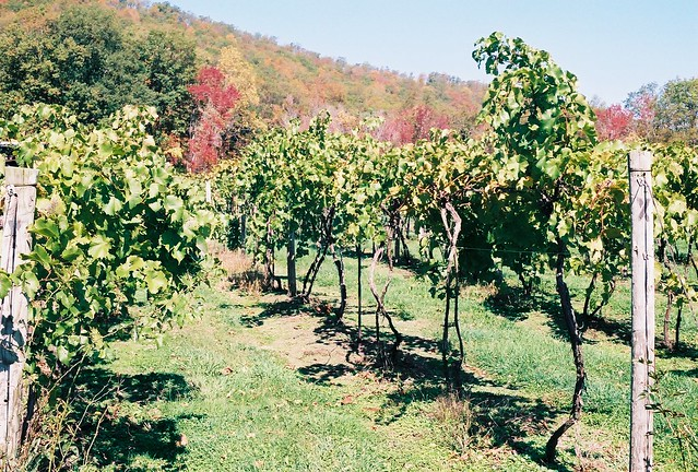 Mount Nittany Vinyard Washed Out Flickr Photo Sharing