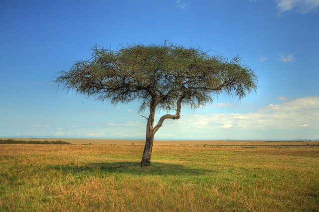 Africa Tree Of Life Flickr Photo Sharing