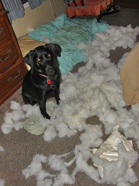 What Happens When You Leave The Dog Home Alone Too Long