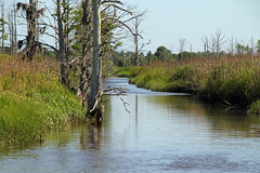 Cape Fear River Tributary