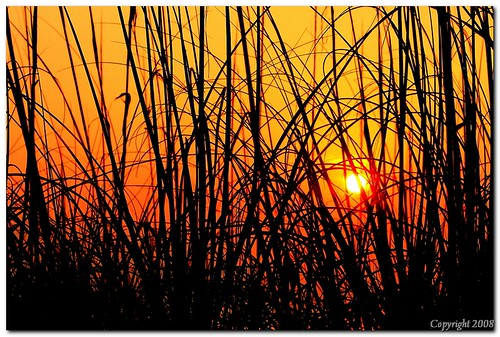 morning beach sunrise canon early quiet florida privacy beac 40d canon70mm200mmf28lis