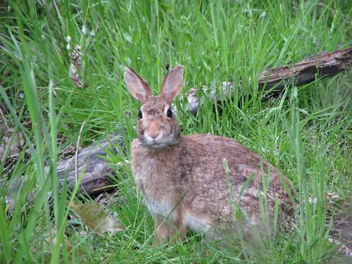 Bunny@Riparian 4