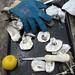 Hog Island Oyster Farm Detritus
