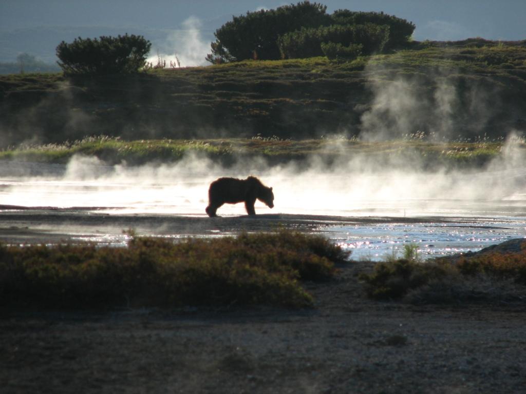 ウゾン•カルデラに生息するクマ