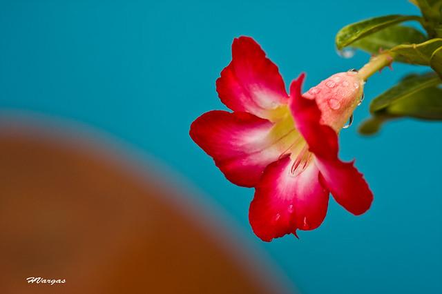 Desert Flower_0121.jpg