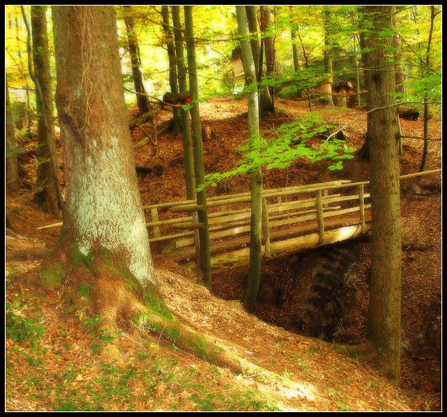 Autumn in the deep Forest - Magical Bridge - Adelberg, Germany