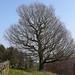 Small photo of Tree