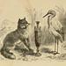 Aesop: Herrick illustrations
