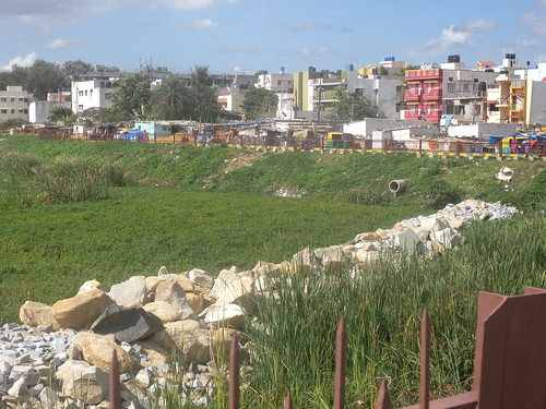 A dried lake  overgrown with weeds and surrounded by buildings