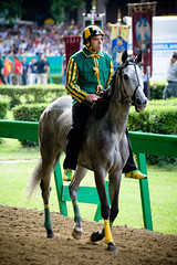 animal sports, horse racing, equestrianism, english riding, western riding, racing, mare, stallion, equestrian sport, sports, mammal, equitation, horse, jockey,