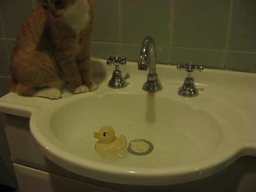 kitten videos